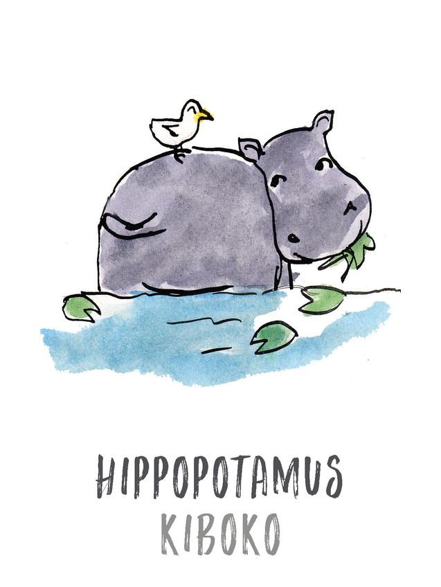 Hippopotamus / Kiboko