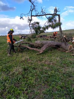 gff_Chainsaw and Vehicle Assessments-2.j