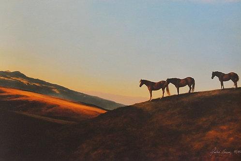 Horses – Julie Greig
