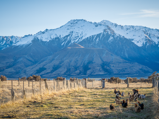 Mt Cook Stn-200717-99.png