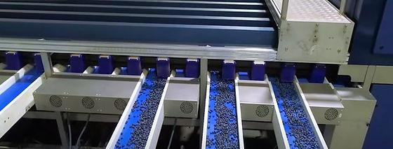 Blueberry crossbelts.JPG