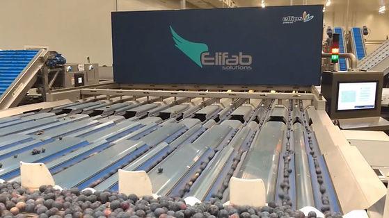 Elifab cover6.JPG