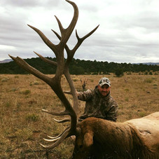 New Mexico Big Game Draw Trophy Elk