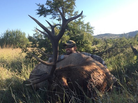 New Mexico Trophy Elk Hunting