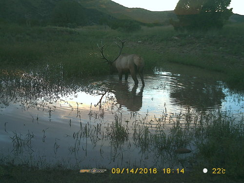 Jordan Hall Outfitting elk camera
