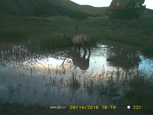 Elk Hunting New Mexico JH Outfitters