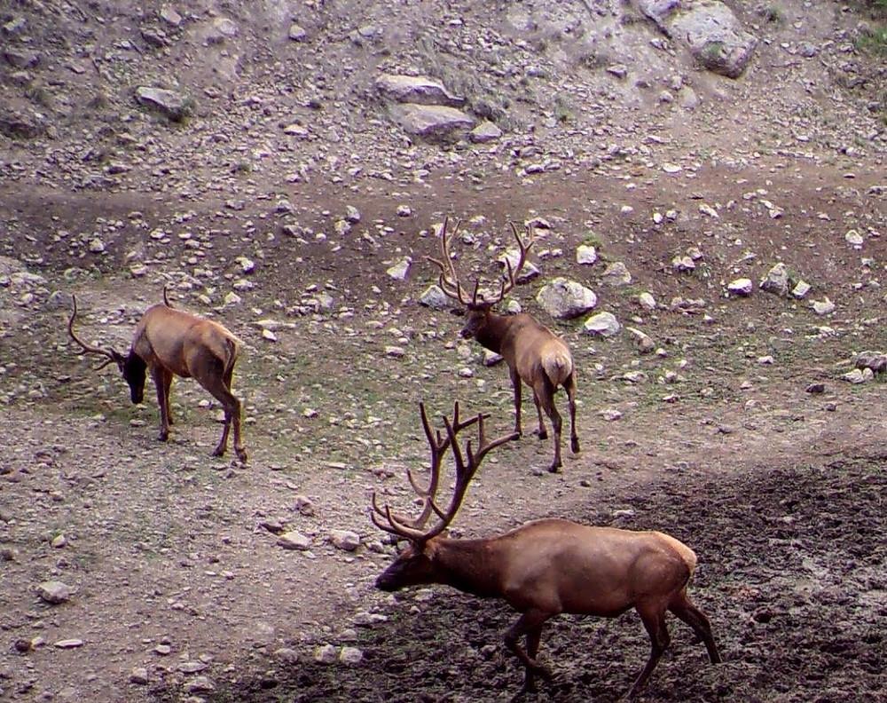 New Mexico Big Game Elk Draw 2018 Jordan Hall A3 Trophy Hunting NM