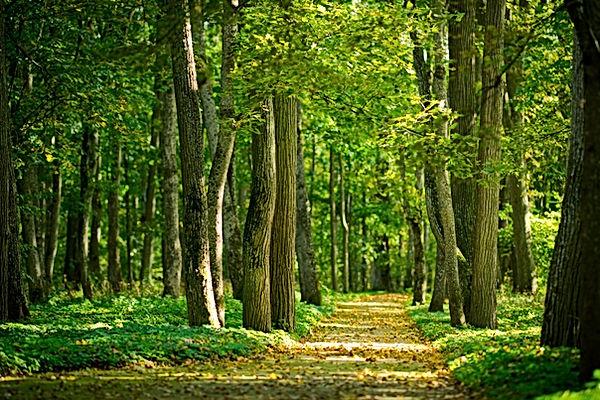 bosque-min (1).jpg