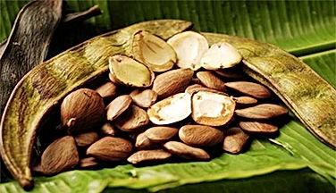 Extrato da Semente dePracaxi da Amazônia - elemento integrante da linha SPA Botanical