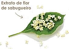 botanicals-extrat0-flor-sabugueiro.jpg