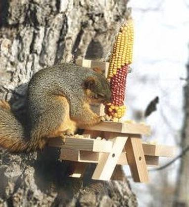 squrirrel on a picnic tabel .jpeg