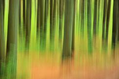 TREES CAMERA MOVEMENT