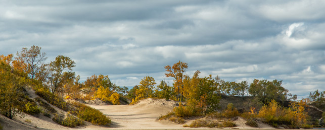 COLOUR IN THE DUNES