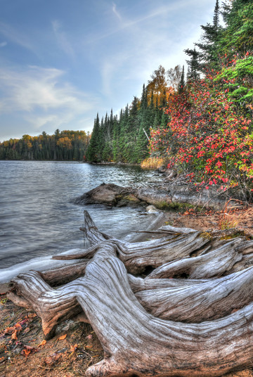 TREE ROOTS AND LAKESHORE