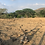 Thumbnail: Terreno Comercial Sajalices
