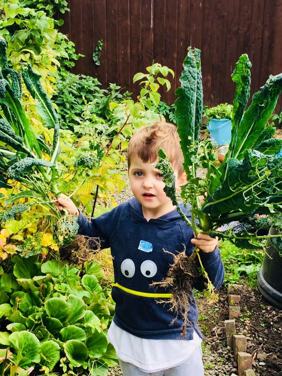My son collecting Kale