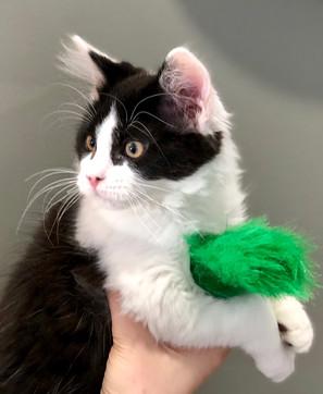 Kitty 3.JPG