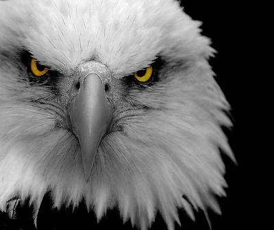 Eagle Olivet.jpeg