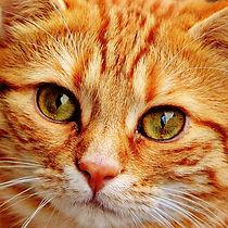 CAT_orange.jpg