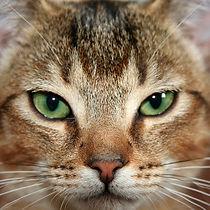 CAT_tabby.jpg