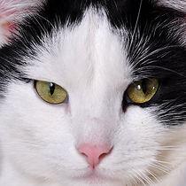 CAT_black.white.jpg