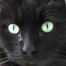 CAT_miu.jpg