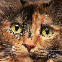 CAT_Torti.jpg