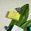Thumbnail: Coconut Verbena | Pedi-Buffer