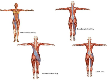 Pelvic Slings - what is the hype? by Tom Workman