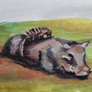 Warthog and Mongoose Sweet 16
