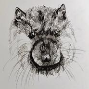 Water Rat Round 1