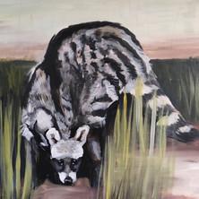 African Civet.jpg