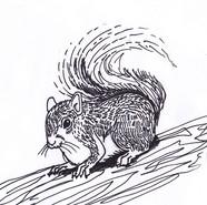 Grey Squirrel #2018MMM