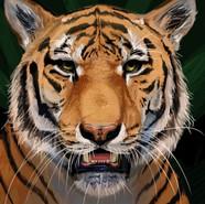 Tiger Champion