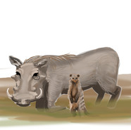 Warthog and Mongoose R2