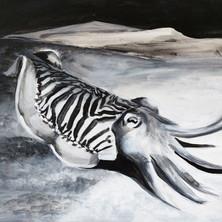 Common Cuttlefish.jpg