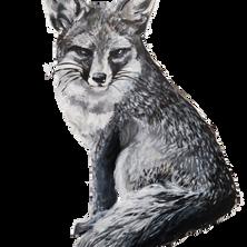 Channel Island Fox.png