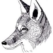 Coyote #2018MMM