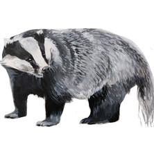 European Badger.jpg