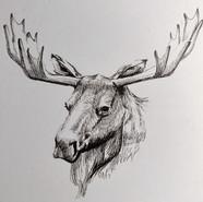 Moose Round 1