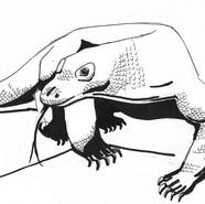 Komodo Dragon #2018MMM