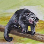Bearcat Sweet 16