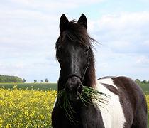 Smoky Pferdefutterberatung