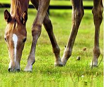 Anweiden - Pferdefutterberatung von Ströh