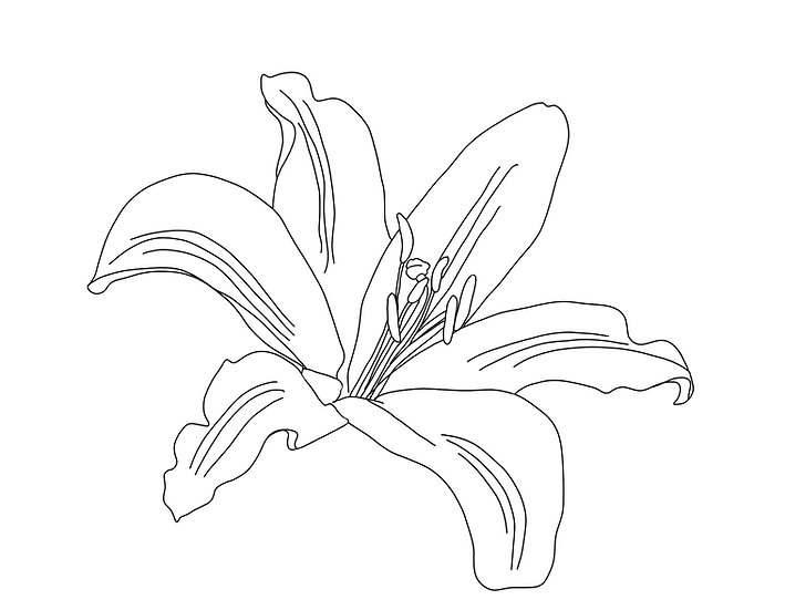 If You Lily Love Me - Coloring Sheet