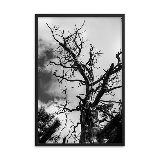 """Twists of Life"" Framed Photo"