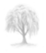 willow tree_edited.png