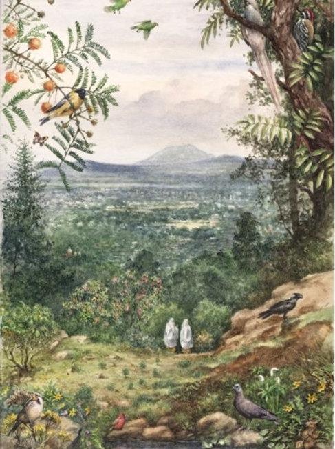 Entoto Natural Park No. 2 - Print