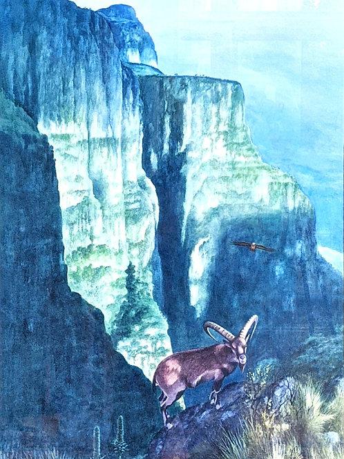 Simien Mountains and Walia Ibex