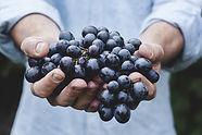 grapes Destemmer Weld Shop Mobile Weldin